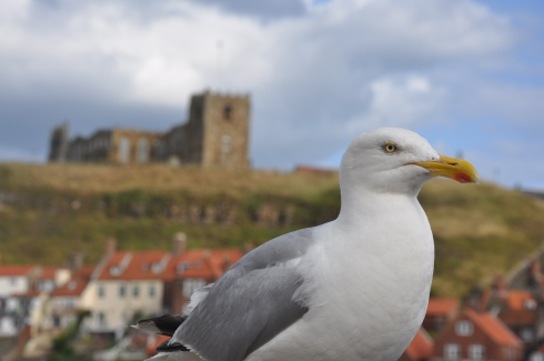 seagull with St Mary's Church in background